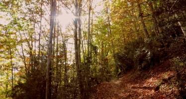 Bosque de la Pardina del Señor, por el GR-15