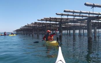 Salida promocional de Kayak de mar