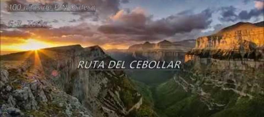 CIRCULAR AL CEBOLLAR